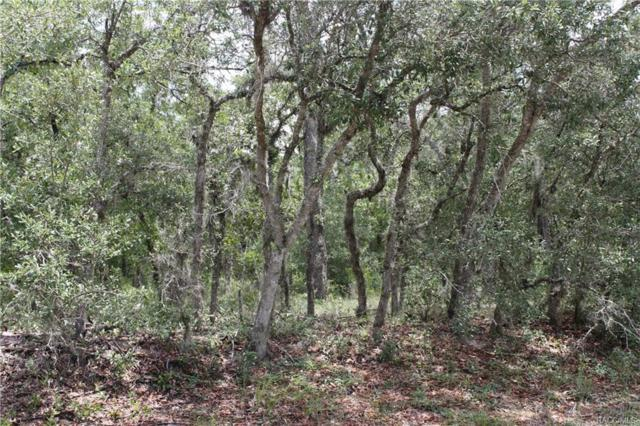 3375 W Blossom Drive, Beverly Hills, FL 34465 (MLS #774334) :: Plantation Realty Inc.