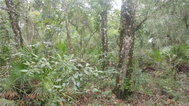 10096 E Tulip Tree Drive, Inverness, FL 34450 (MLS #775072) :: Plantation Realty Inc.