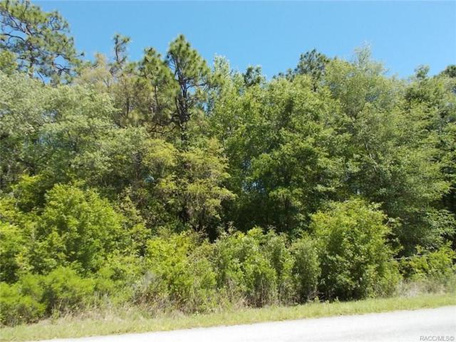 19895 SW 59th Lane, Dunnellon, FL 34434 (MLS #771918) :: Plantation Realty Inc.