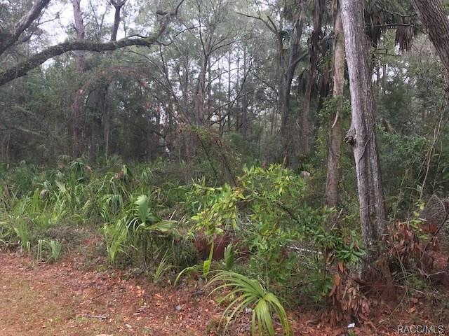 Lot 8 Riverside Drive, Yankeetown, FL 34498 (MLS #770137) :: Plantation Realty Inc.