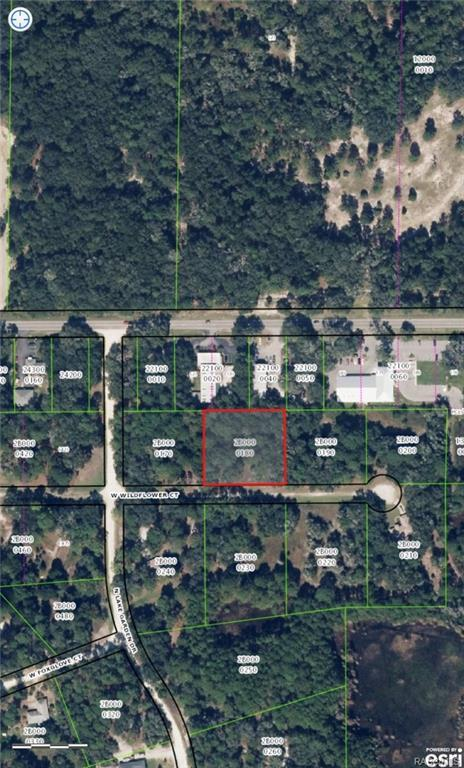 2217 W Wildflower Court, Dunnellon, FL 34434 (MLS #770888) :: Plantation Realty Inc.