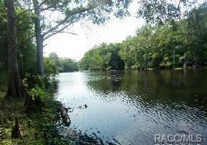 10585 N Big Bass Trail, Dunnellon, FL 34434 (MLS #771379) :: Plantation Realty Inc.
