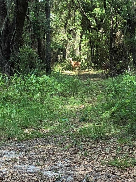 2711 E Dove Court, Inverness, FL 34452 (MLS #773697) :: Plantation Realty Inc.