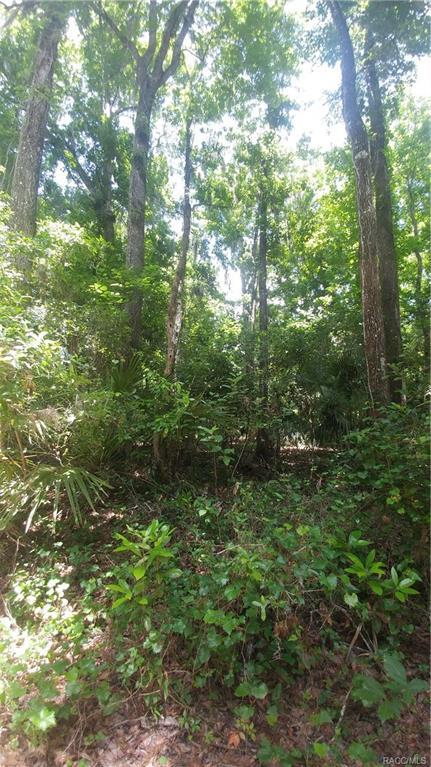 4061 S Owens Trail, Inverness, FL 34450 (MLS #773893) :: Plantation Realty Inc.