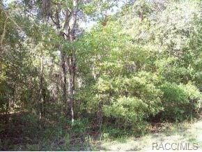6021 W Conestoga Street, Beverly Hills, FL 34465 (MLS #777494) :: Plantation Realty Inc.