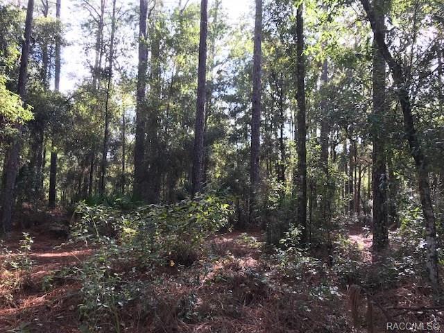 2910 W Sunkist Lane, Dunnellon, FL 34433 (MLS #777780) :: Plantation Realty Inc.