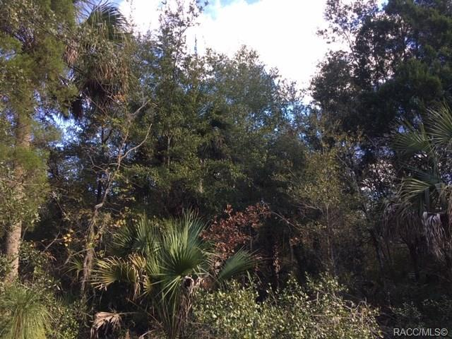 223 N Quiet Pines Point, Crystal River, FL 34429 (MLS #779021) :: Plantation Realty Inc.