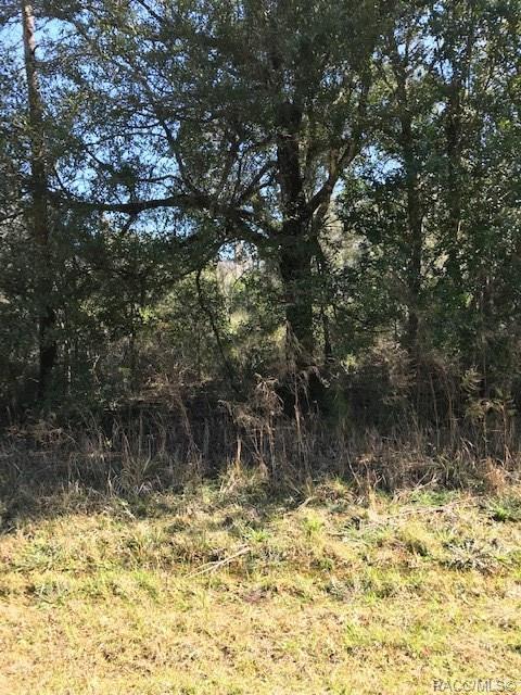 9623 N Cavewood Avenue, Crystal River, FL 34428 (MLS #780144) :: Plantation Realty Inc.
