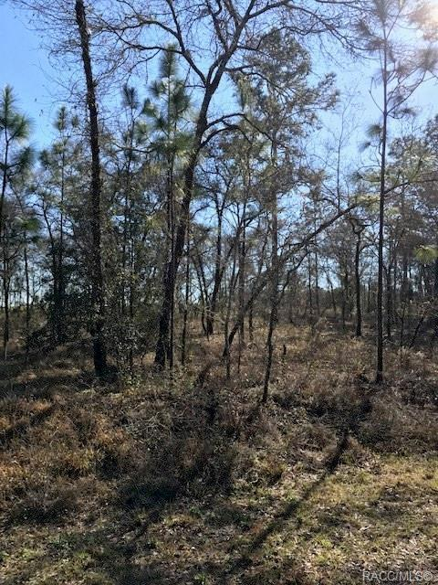 0 NW Buena Vista Road, Dunnellon, FL 34431 (MLS #780150) :: Plantation Realty Inc.