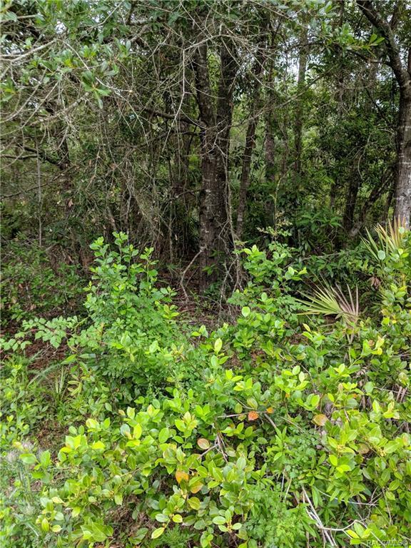 1179 N Tessa Terrace, Crystal River, FL 34429 (MLS #780738) :: Plantation Realty Inc.