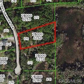 12119 N Lake Garden Drive, Dunnellon, FL 34434 (MLS #782111) :: Plantation Realty Inc.