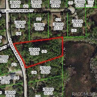 12161 N Lake Garden Drive, Dunnellon, FL 34434 (MLS #782113) :: Plantation Realty Inc.