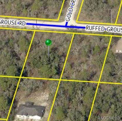 12456 Ruffed Grouse Road, Brooksville, FL 34614 (MLS #786720) :: Pristine Properties