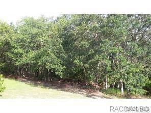 1550 W St. Elizabeth Place, Citrus Springs, FL 34434 (MLS #787925) :: 54 Realty