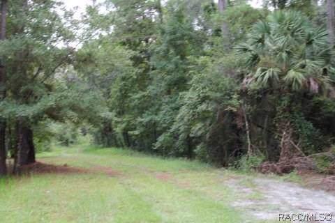 581 S Chambers Way, Inverness, FL 34450 (MLS #788662) :: Plantation Realty Inc.