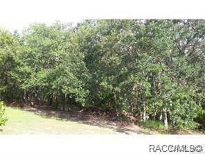 0 Salters Street, Spring Hill, FL 34609 (MLS #789092) :: Plantation Realty Inc.