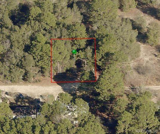 2508 Monroe Street, Inverness, FL 34453 (MLS #790303) :: Plantation Realty Inc.