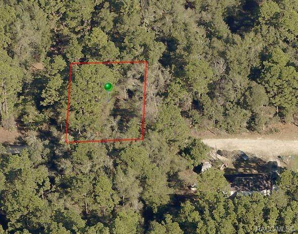 2514 Monroe Street, Inverness, FL 34453 (MLS #790305) :: Plantation Realty Inc.