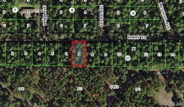 2905 Kerry Street, Inverness, FL 34452 (MLS #792214) :: Plantation Realty Inc.