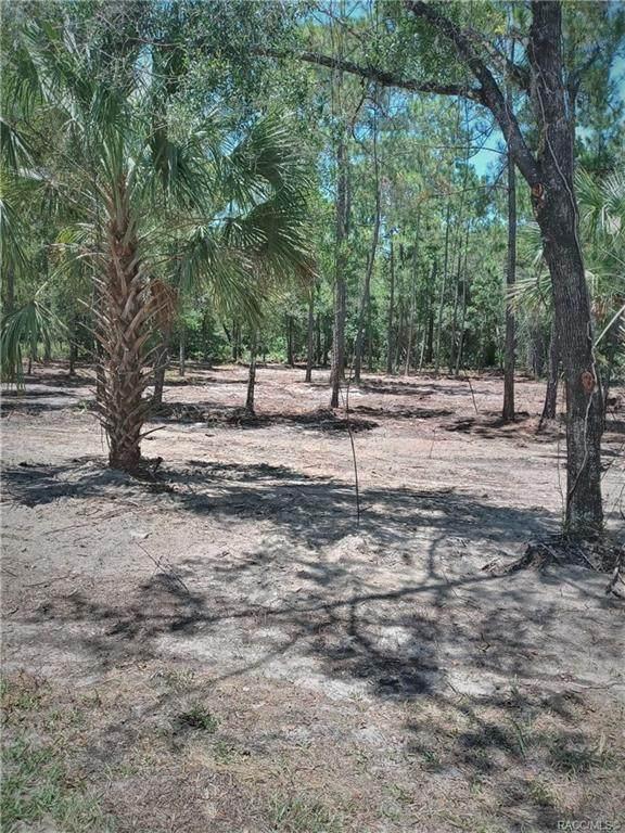 11899 W Riverwood Drive, Crystal River, FL 34428 (MLS #793871) :: Plantation Realty Inc.
