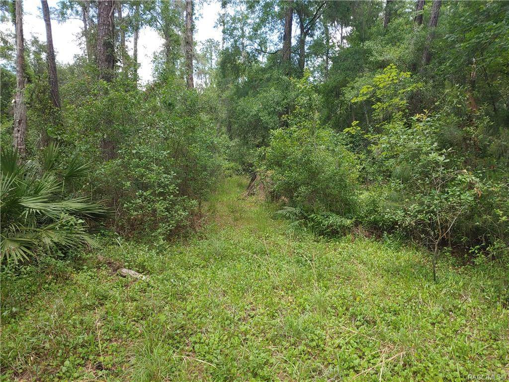 10349 Big Bass Trail - Photo 1