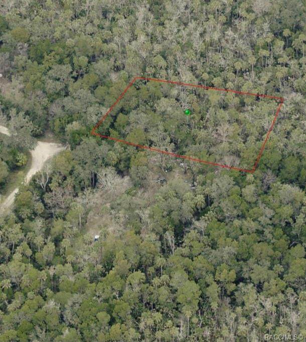 5791 S Boulevard Drive, Homosassa, FL 34446 (MLS #796763) :: Plantation Realty Inc.