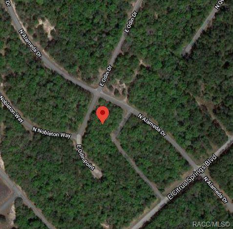 894 E Odin Drive, Citrus Springs, FL 34434 (MLS #796840) :: Plantation Realty Inc.