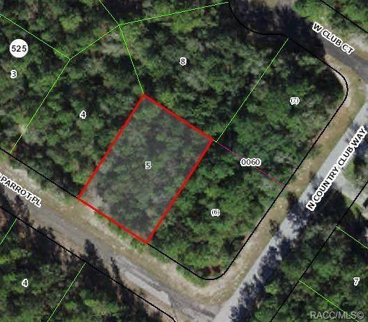373 W Parrot Place, Citrus Springs, FL 34434 (MLS #796843) :: Plantation Realty Inc.