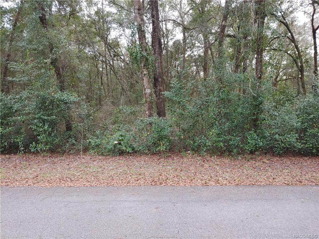 6154 Homosassa Trail - Photo 1