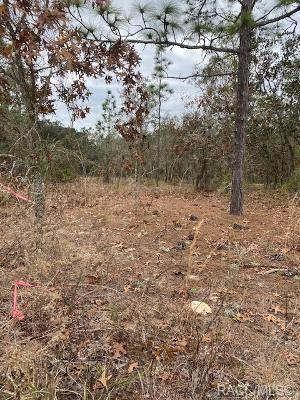 121 E Cypress Boulevard E, Homosassa, FL 34446 (MLS #797844) :: Plantation Realty Inc.