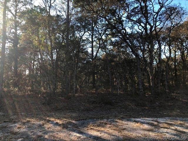 Lot 30 SE 133 Terrace, Dunnellon, FL 34431 (MLS #798076) :: Plantation Realty Inc.