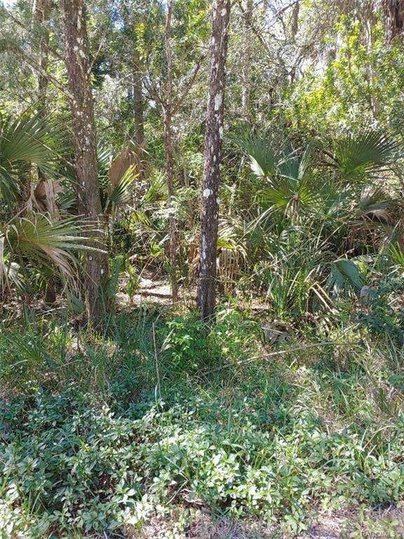1142 S Blalock Way, Crystal River, FL 34429 (MLS #799278) :: Plantation Realty Inc.