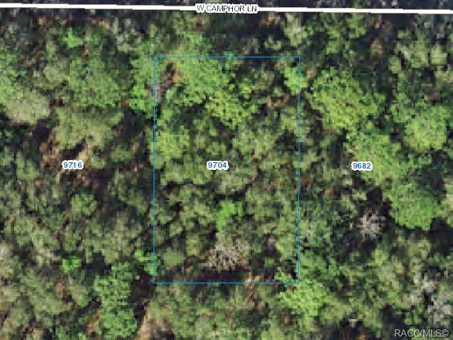 9704 W Camphor Lane, Crystal River, FL 34428 (MLS #800345) :: Plantation Realty Inc.