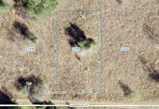 2304 Harrison Street, Inverness, FL 34453 (MLS #802266) :: Plantation Realty Inc.