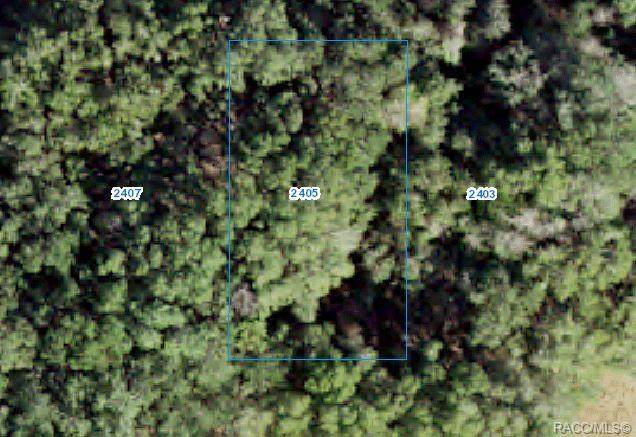2405 Harrison Street, Inverness, FL 34453 (MLS #802284) :: Plantation Realty Inc.