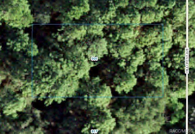 901 Hillcrest Avenue, Inverness, FL 34453 (MLS #802286) :: Plantation Realty Inc.