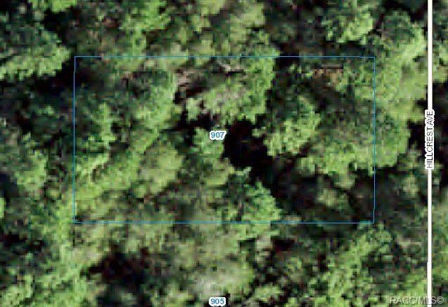 907 Hillcrest Avenue, Inverness, FL 34453 (MLS #802289) :: Plantation Realty Inc.