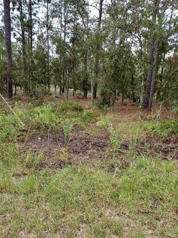 TBD SW Tree Top Road, Dunnellon, FL 34431 (MLS #806393) :: Plantation Realty Inc.