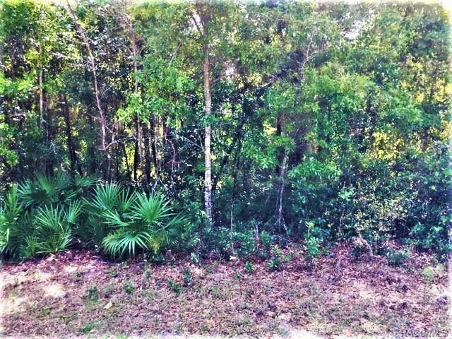 5405 S Memorial Drive, Homosassa, FL 34446 (MLS #771631) :: Plantation Realty Inc.