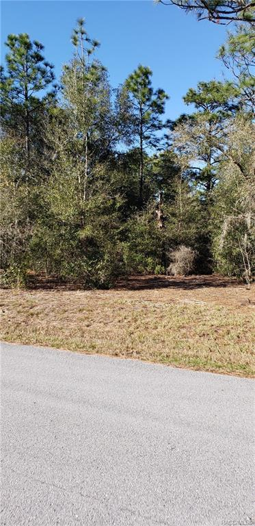 7502 SW 202nd Court SW, Dunnellon, FL 34431 (MLS #779635) :: Plantation Realty Inc.