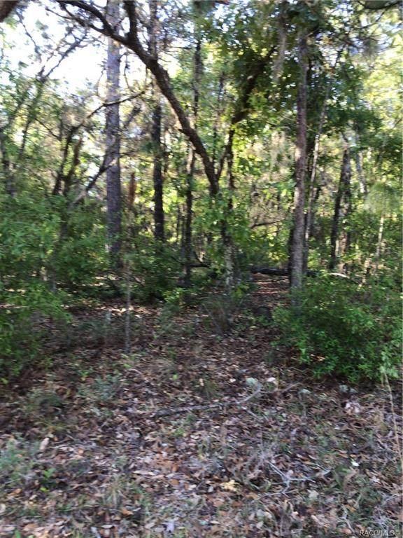 4446 N Lena Drive, Beverly Hills, FL 34465 (MLS #800359) :: Plantation Realty Inc.
