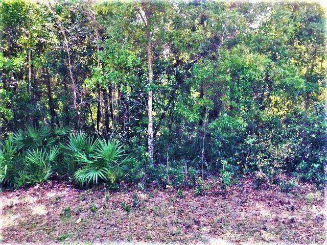 5405 S Memorial Drive, Homosassa, FL 34446 (MLS #771631) :: Plantation Realty Inc.