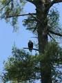 4990 Arbor Court - Photo 9