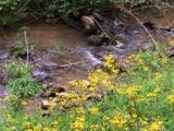 944 Hunter Creek Road - Photo 10