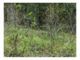 30 acre Otter Creek Road - Photo 14