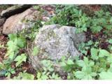6 Deerhorn Circle - Photo 5