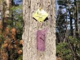 000 Winding Ridge Road - Photo 3