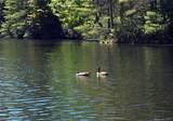 0 Whisper Lake Drive - Photo 7