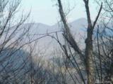 126 Large Poplar Trail - Photo 1