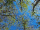 14 Woodsong Way - Photo 19